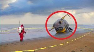 ცუნამის შედეგად, სანაპიროზე გამორიყული იდუმალი არსებები!