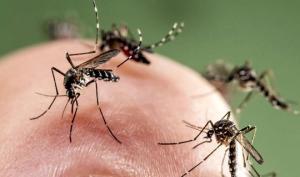 კოღოს ნერწყვის გავლენა ადამიანის ჯანმრთელობაზე