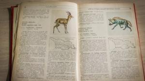 წითელი წიგნი: გადაშენების პირას მყოფი ცხოველები