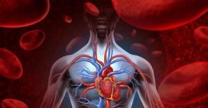 ჩაყავით ხელები ცივ წყალში და გაიგეთ როგორ მუშაობს თქვენი სისხლის მიმოქცევის სისტემა
