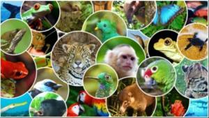 იცით თუ არა ცხოველების და ფრინველების ნაშიერთა სახელები?