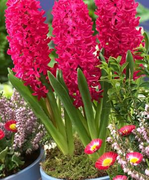 ყვავილები, რომლებსაც ზოდიაქოს ნიშნის მიხედვით ოჯახში ბედნიერება მოაქვთ ( + ფოტოები )
