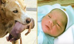 შემზარავი ფაქტები – ადამიანები, რომლებიც ცხოველებმა სასიკვდილოდ ვერ გაიმეტეს