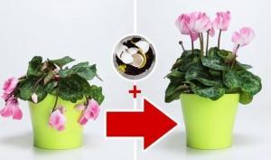 ყველაზე საინტერესო ქოთნის მცენარეების შესახებ (მოვლა, გახარება, გამრავლება...)
