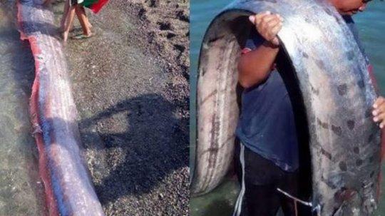 უჩვეულო ახალი ამბები: ფილიპინებზე უცნაური თევზი დაიჭირეს, პერუში უცხოპლანეტელის ქანდაკება დადგეს