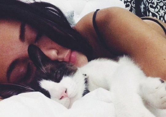 რატომ უყვართ კატებს ადამიანებთან ჩახუტებულს ძილი