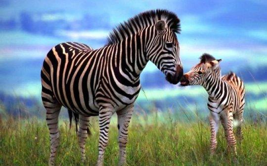 უცნაური  და  დაუჯერებელი ფაქტები  ცხოველთა  სამყაროს  შესახებ