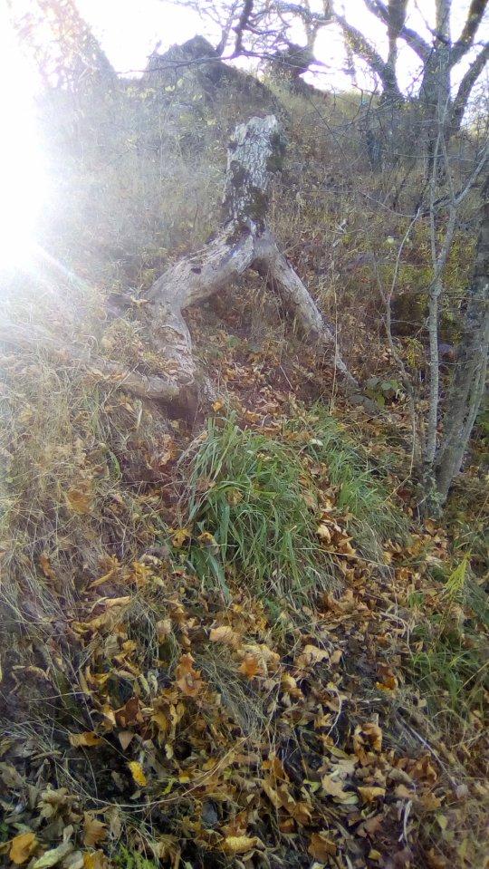 ეს ბაყაყის ქვედა კიდურებს გვაგონებს