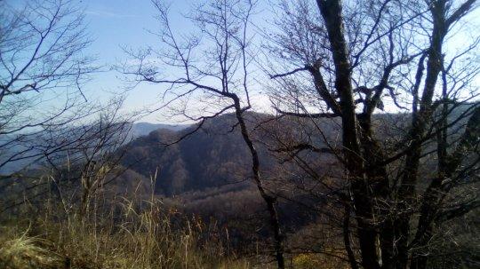ტყეში