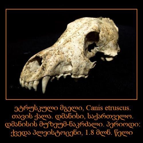 პალეონტოლოგია,  ბუნების ისტორია