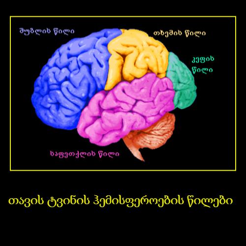თავის ტვინის ჰემისფეროების წილები