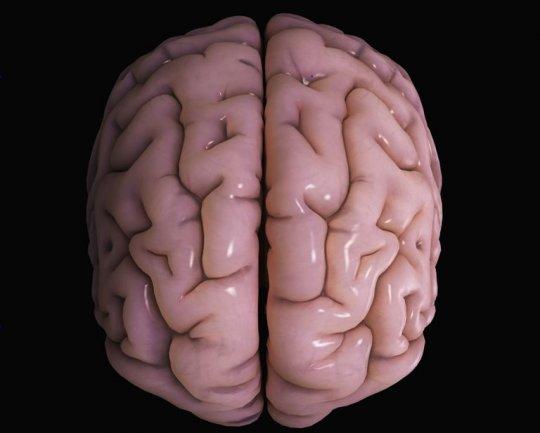 ტვინის გარე საფარი ანუ კორტექსი