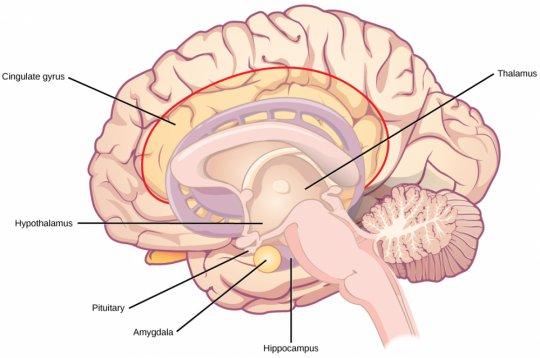 ტვინის ღრმა სტრუქტურები