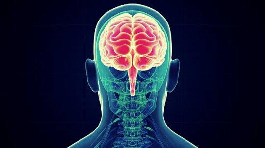 თავის ტვინის ღრმა სტრუქტურები