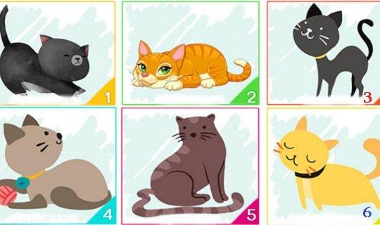 ტესტი: კატა, რომელსაც აირჩევთ თქვენს შესახებ ძალიან ბევრს იტყვის