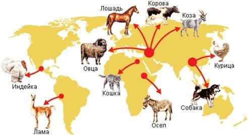 შინაური ცხოველების წარმოშობის ძირითადი ცენტრები.