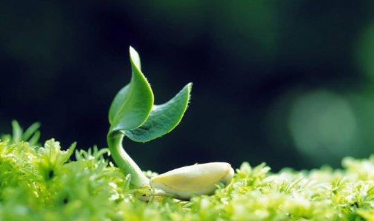 «ჭკვიანი» მცენარეები