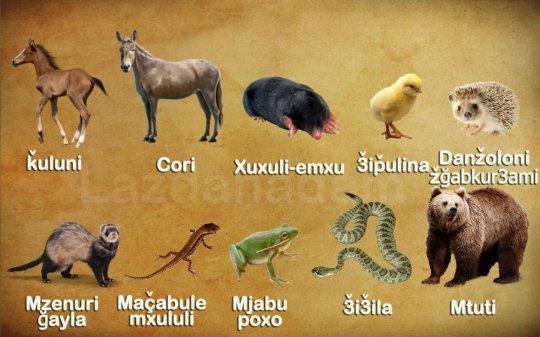 ცხოველების სახელები ლაზურად