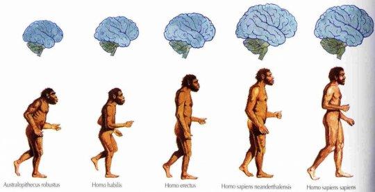 ევოლუცია - უდავო მეცნიერული ფაქტი