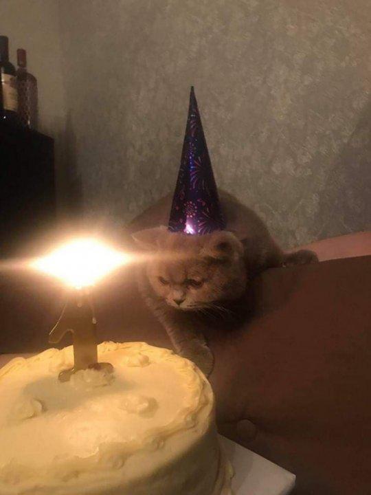 ძაღლის შემდეგ დაბადების დღე ახლა კატას გადაუხადეს