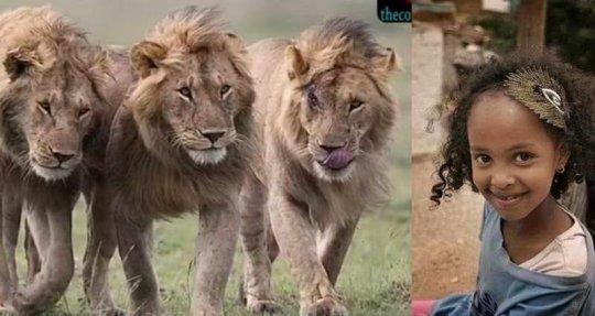 გოგონა და ლომები