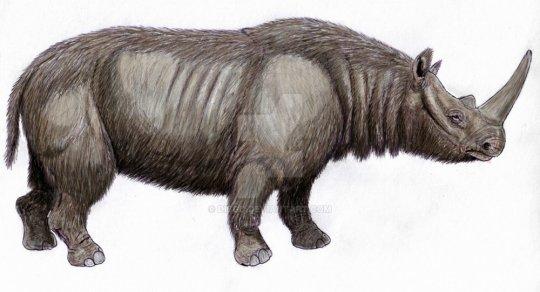 მსოფლიოში უძველესი ცხოველის დნმ,  რომლის გაშიფრვაც სრულად მოხერხდა დმანისიდანაა