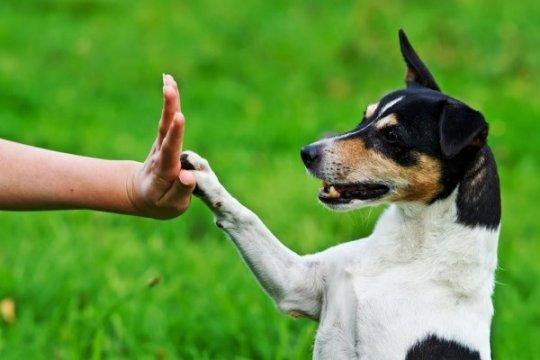 ურთიოერთობა ძაღლებთან: აღრზდის საფუძვლები.