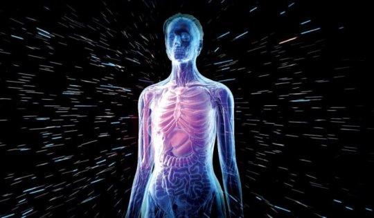 ადამიანის სხეული
