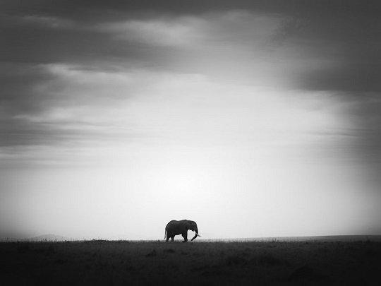 ფოტოგრაფს უყვარს სპილოები და მათი სიდიადის საჩვენებლად მთელი ფოტოკოლექცია შექმნა
