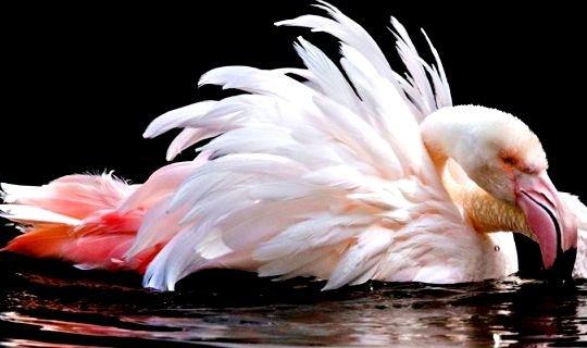 მეცნიერებმა აღმოაჩინეს ყველაზე ხანდაზმული ფრინველი - მან 83 წელი იცოცხლა