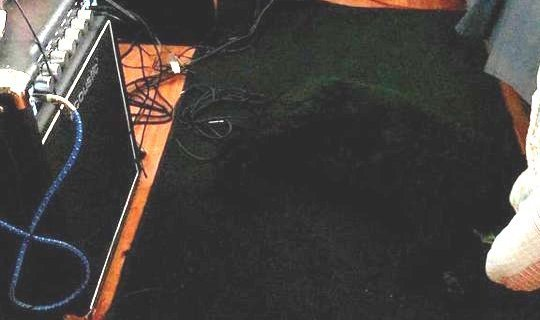 სად არის ძაღლი? - სახალისო ფოტო-გამოცანა