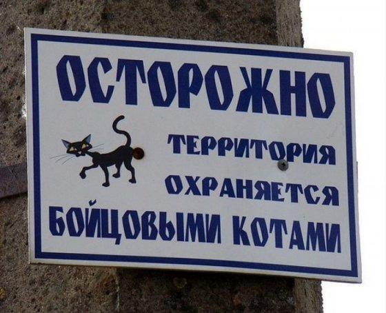 ფრთხილად! ეზოს მებრძოლი კატები იცავენ–აბრა ეზოს კარებთან