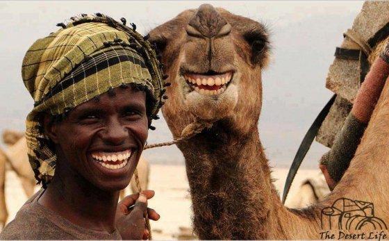 აქლემის სიცილი