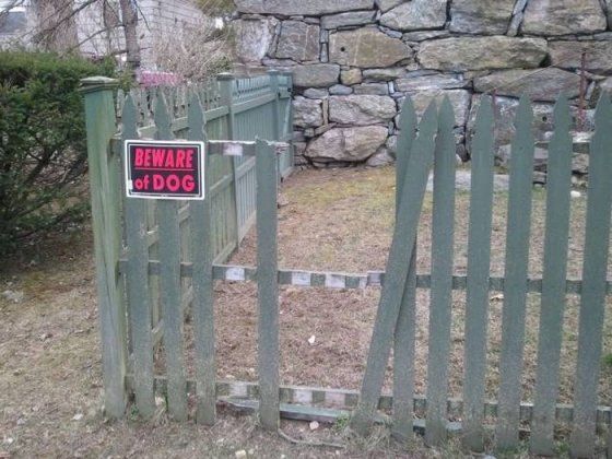 ფრთხილად იყავით ძაღლთანო...