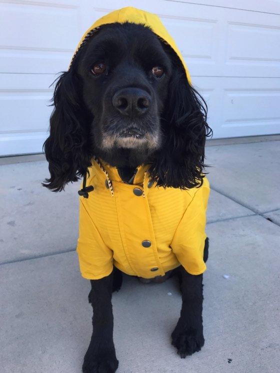 ძაღლი მოდურ ქურთუკში