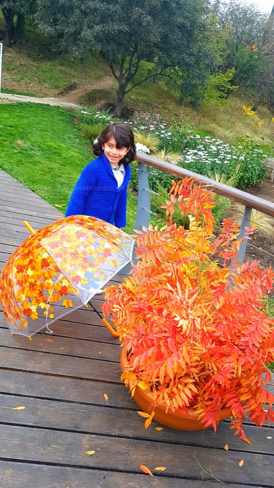 ქოლგაზეც რომ ფოთოლთ ცვენაა