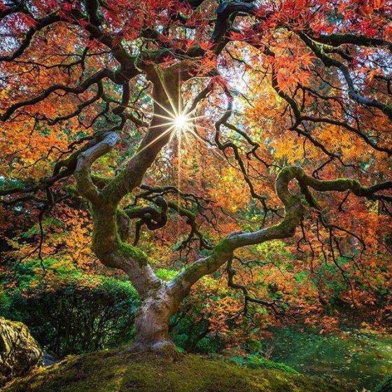 ბუნების მომაჯადოვებელი სილამაზე