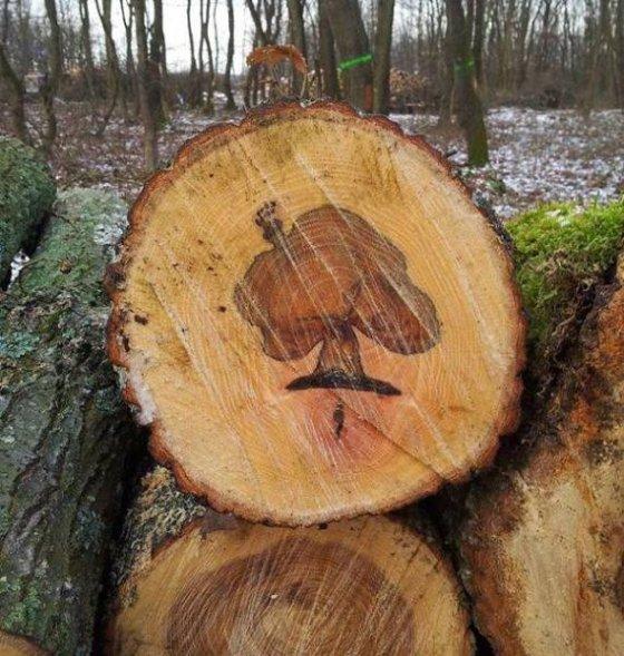 ხეში ბუნებრივი ნახატი