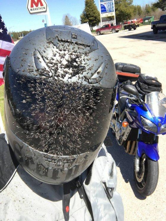 """ეტყობა ისე სწრაფად მიდიოდა ეს ბაიკერი, რომ მუზარადზეა კოღოების """"არმადა"""" მიჭყლეტილი"""