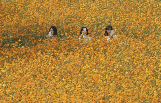 სელფი ყვავილებში