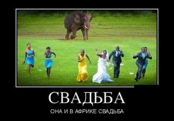 ქორწილი აფრიკაში