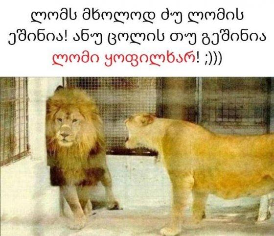 ლომსაც კი ცოლის ეშინია