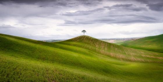 მარტოსული ხე
