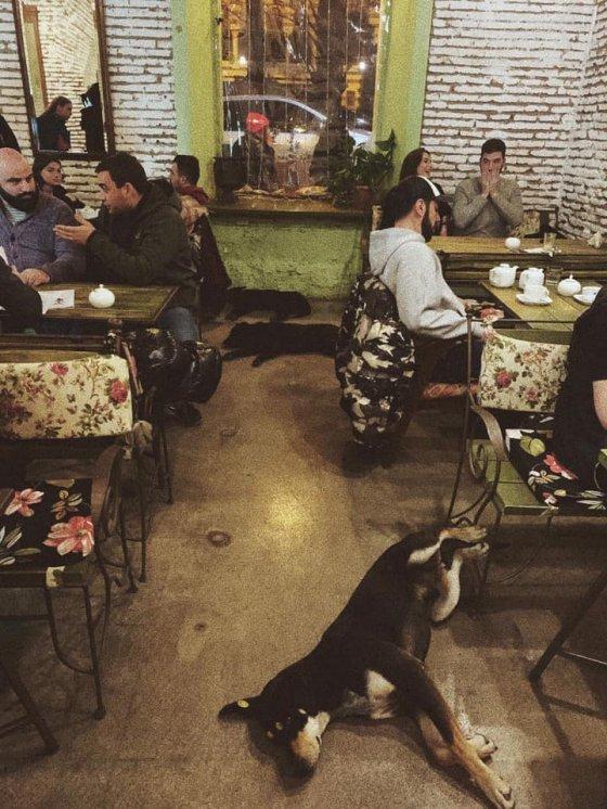 ასეთი ამბებია კაფე ჩაის სახლში  ძაღლებს უშვებენ გასათბობად, თან საჭმელსაც აჭმევენ  მისაბაძები და კარ