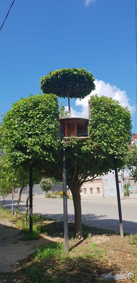 """""""ბირჟა"""" ხე  ქუთაისში"""