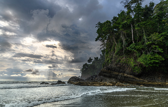 როცა ტროპიკული ტყე ოკეანეს ხვდება