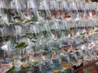 თევზის მაღაზია