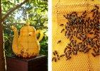 ფუტკრების მიერ შექმნილი ხელოვნების ნიმუში