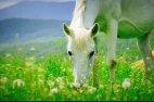 არაჩვეულებრივი ცხენი