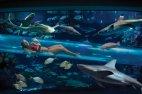 ულამაზესი აუზი, სადაც შეგიძლიათ ზვიგენებთან ერთად იცურაოთ სპეციალური მინის გვირაბის საშუალებით